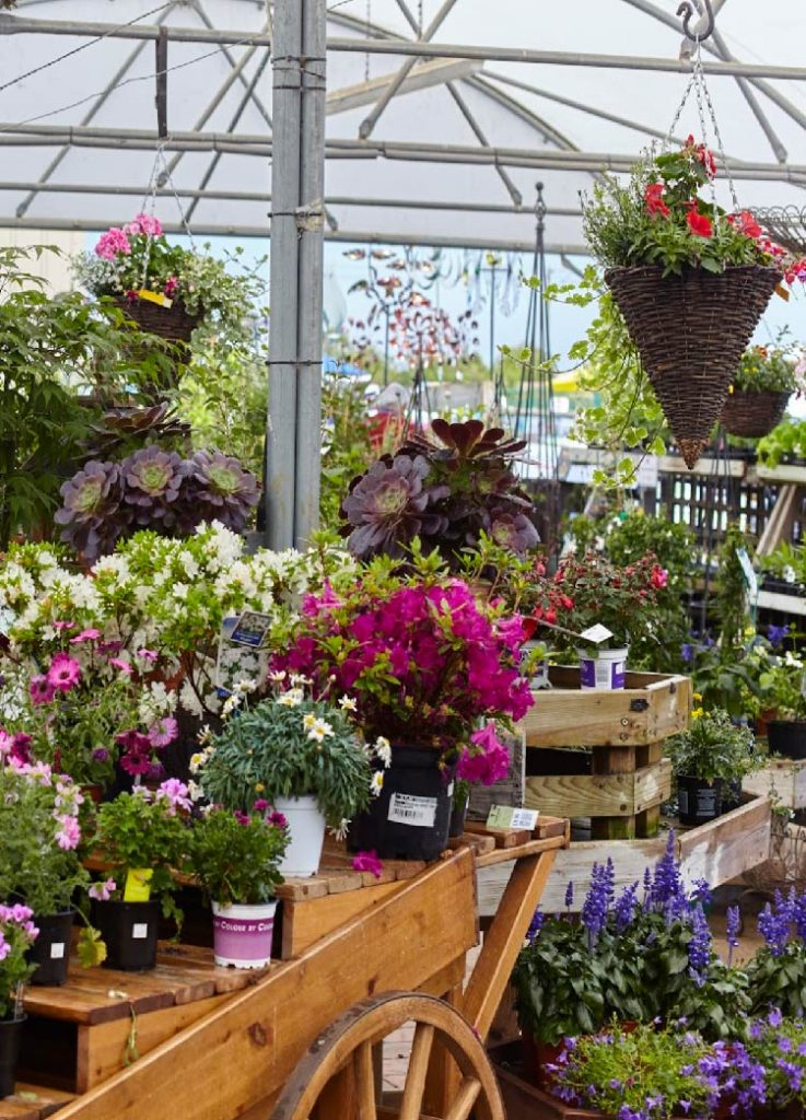 Bury Lane Garden Shop Flowers