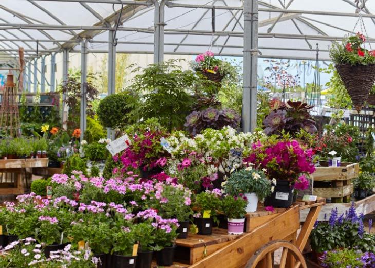 Bury Lane Garden Centre Shop Flowers