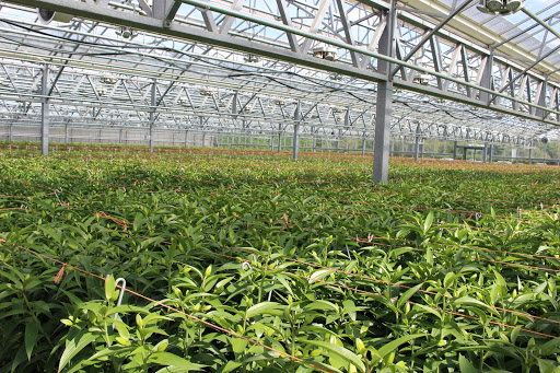 Bury Lane Flower Farm Greenhouse 6